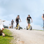 Downhill_Roller_in_Ofterschwang_Gruppe_fährt_an_Weiderind_vorbei
